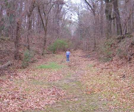 The old natchez trace