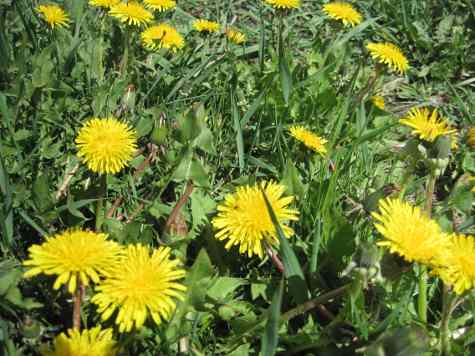 What is a yellow flower called images flower decoration ideas what are yellow flowers called choice image flower decoration ideas what are yellow flowers called choice mightylinksfo